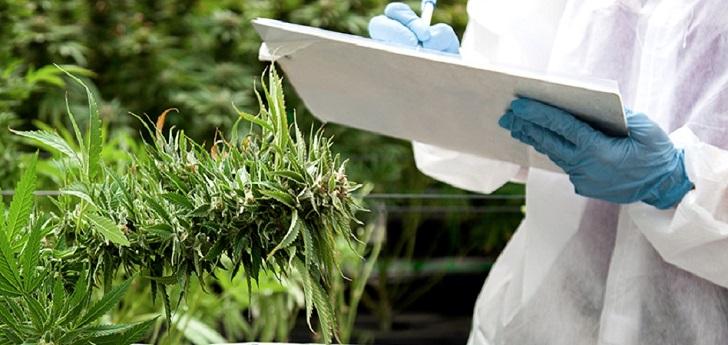 La ONU elimina el cannabis medicinal de la lista de drogas más peligrosas