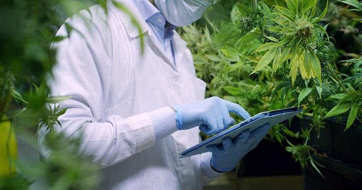 Canamedics se adelanta en la carrera del cannabis medicinal en España: cultivará en Barcelona